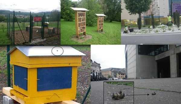 abeilles expo ruchers Buisson Rond