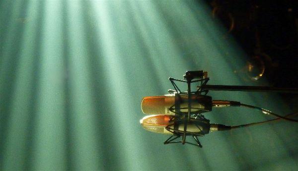Micros-insectes.jpg