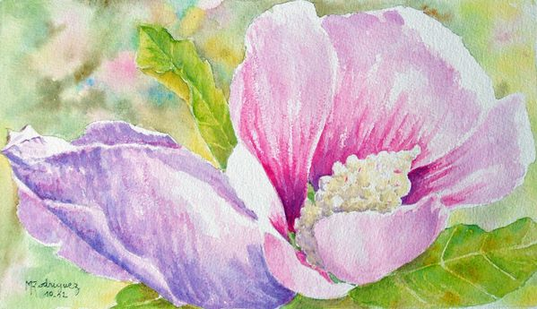 aquarelle-althea.jpg