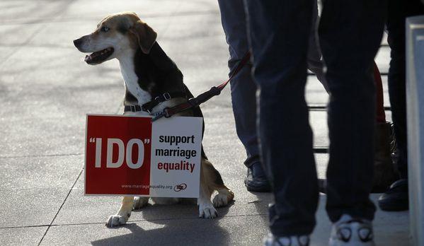 sem13marh-Z3-chien-pour-le-mariage-gay-USA.jpg