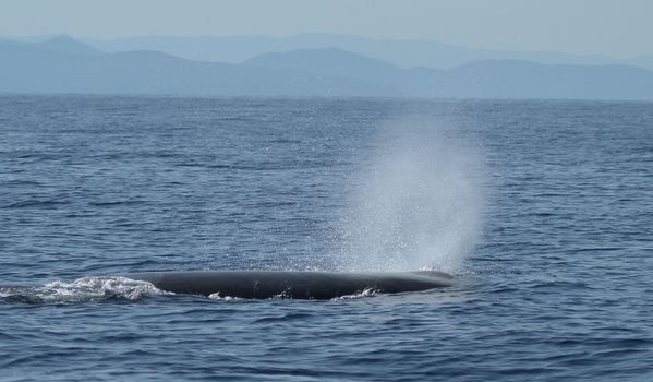 whale-watching-08-07-2012 9260 -3m