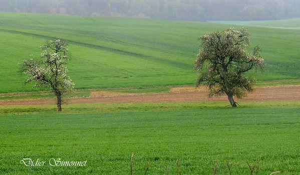 ARTONGES ( Aisne ) Campagne sous la pluie ( Didier Simonnet