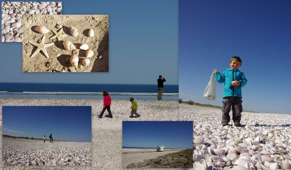 montage plage coquillages