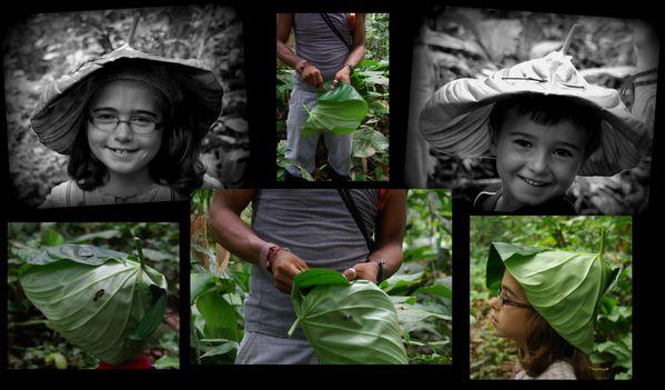 amazonie chapeaux feuille