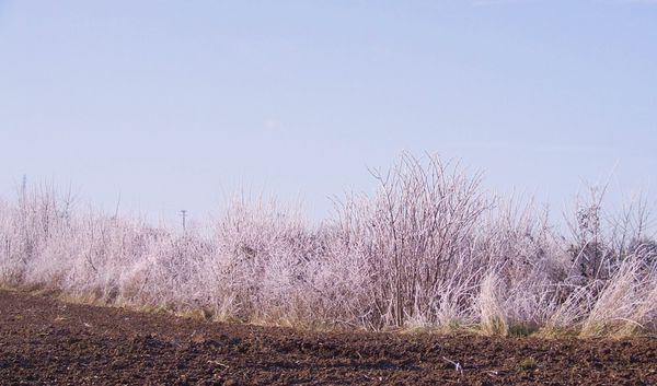 20100131 Arbres-givres 009 (bl)