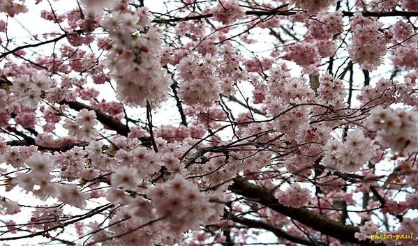 printemps_002.jpg
