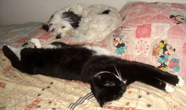 Fifi-et-Domino-sur-le-lit.JPG