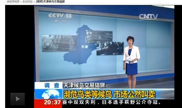 Oiseaux-trafiques-a-Tianjin-1-copie-1.jpg