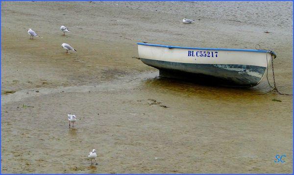 Baie de Somme à marée basse-01