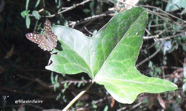 feuille-papillon-2.jpg