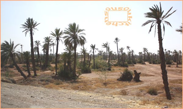 Jemaa El Fna-Marrakech-Maroc:Artisanat,Culture,Gastronomie