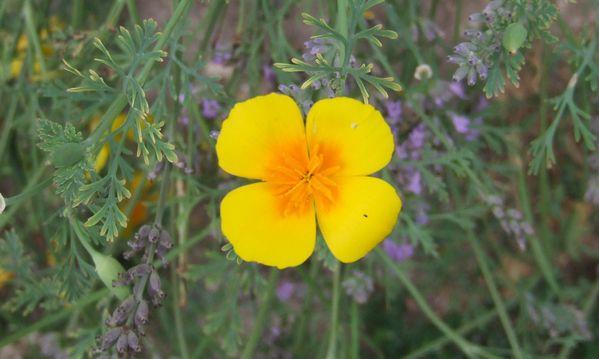20100812 S32 fleur 4667