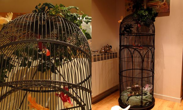 ma cage oiseaux. Black Bedroom Furniture Sets. Home Design Ideas