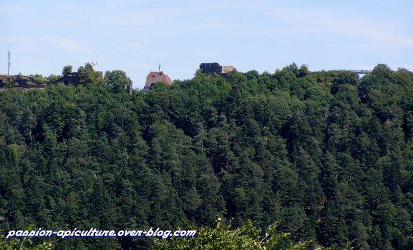 Château du Greifenstein (5) + Ht Barr