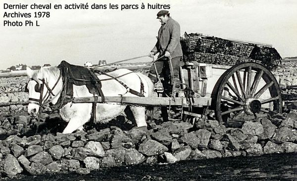 huitres-cheval.jpg