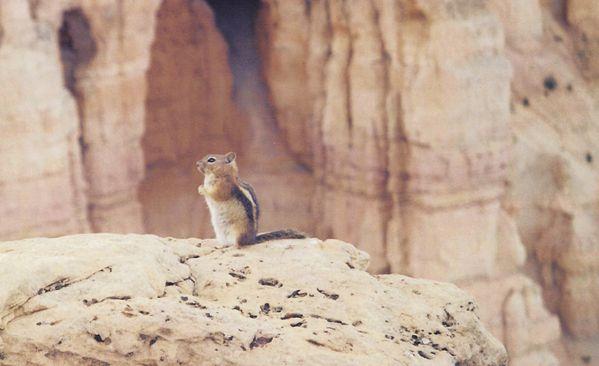 Bryce Canyon 056