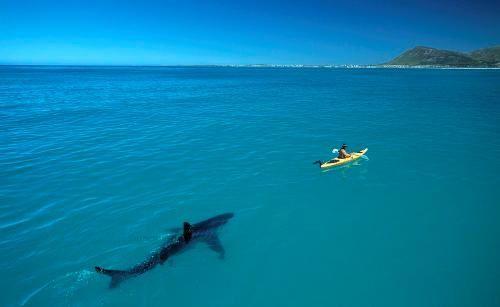 white-shark-kayak3.jpg