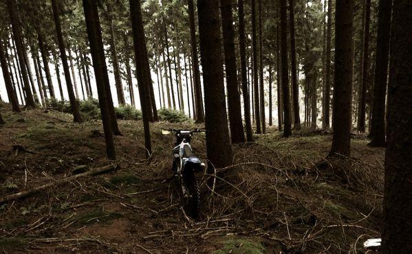 im Wald mit der tm