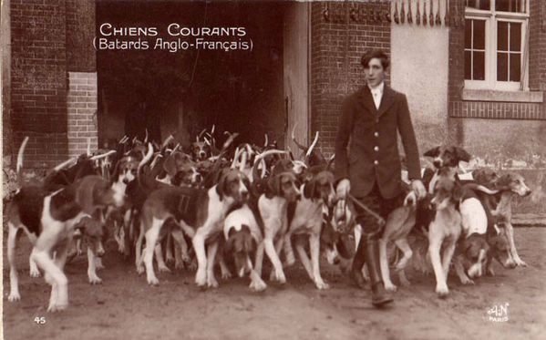 AN Paris Chiens courants (Batards Anglo-Français) - 45 BD