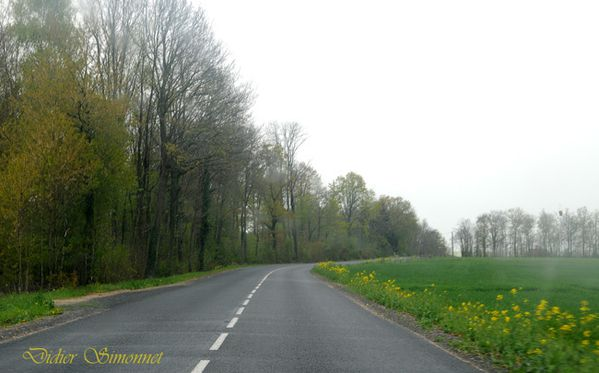 Route de MONTMIRAIL EN BRIE D41 ( Marne )