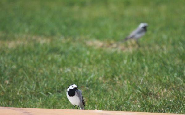 Oiseaux 4201b