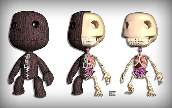 Jason Freeny - Ours en peluche - Anatomie digitale - Le car