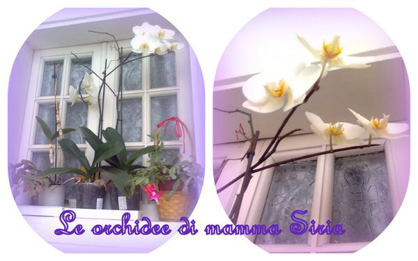 collage-orchidee.jpg