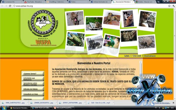 ASHAA Asociacion Hondurareña Amigos de los Animal-copia-3