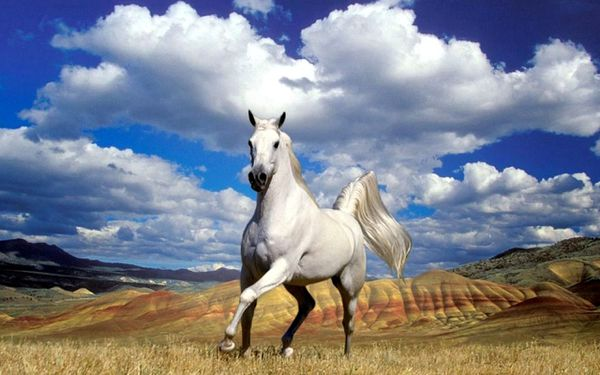 white_horse_mountain_and_sky_background_wallpaper_-_1280x80.jpg