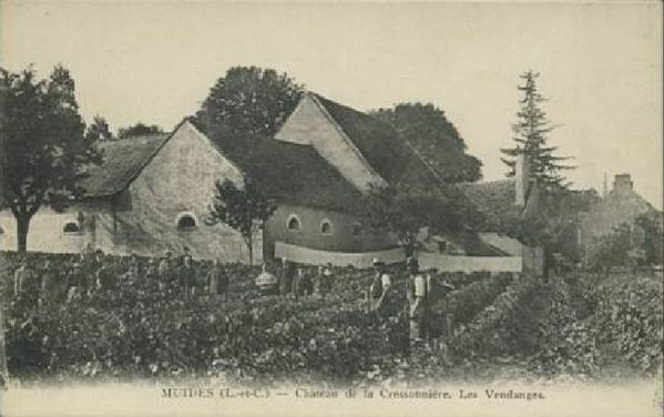 cressonniere-vendanges.jpg