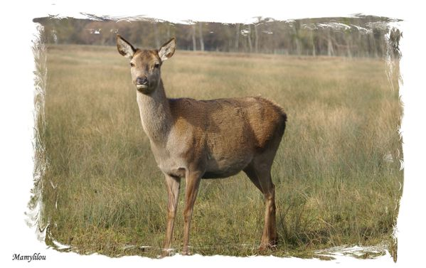 20100204 26 Bambi (7 )