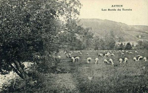 Moutons 00