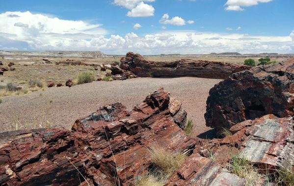 Petrified Forest Giant logs (2)