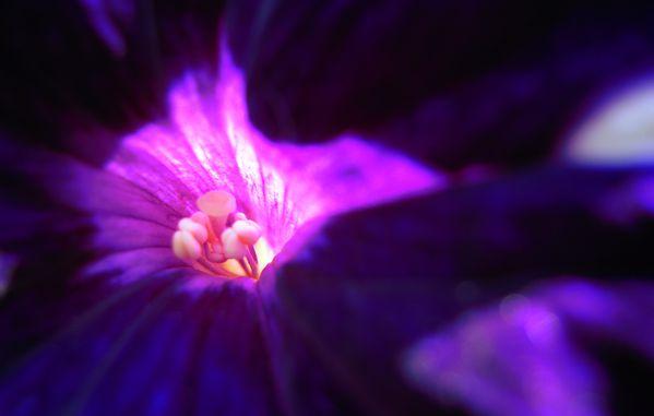 fleur à coeur.2