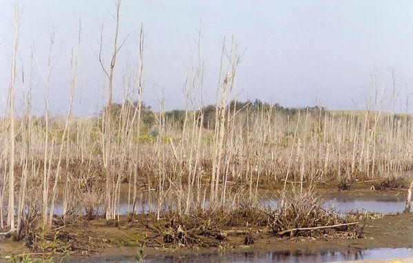 Espagne 1998 001