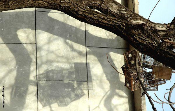 Haizi-Changping-Cages - Janvier 2011 031 copy