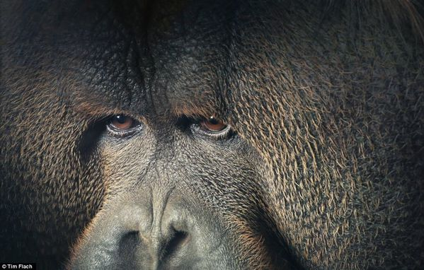 Tim-Flach-18.jpg