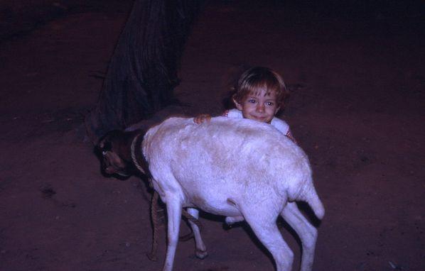 Calin-au-mouton.jpg