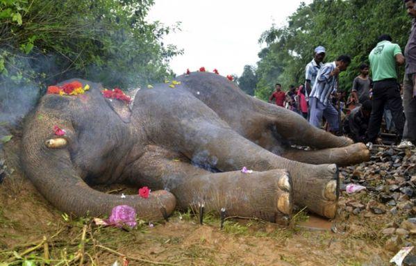 sem13aouc-Z10-Elephant-en-Inde-percute-par-un-train.jpg