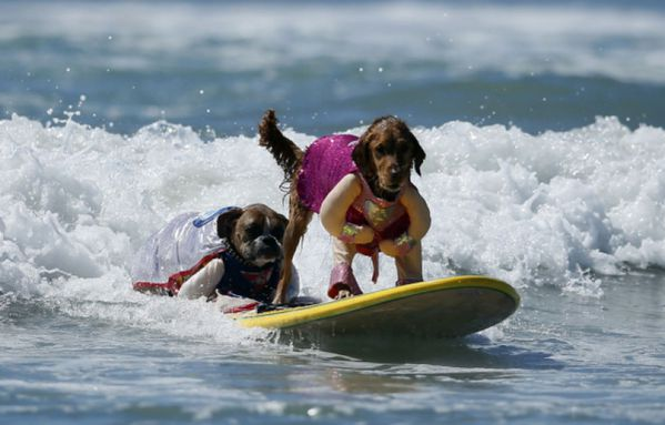 sem13sepl-Z12-Nouvelle-vague-competition-surf-canine.jpg