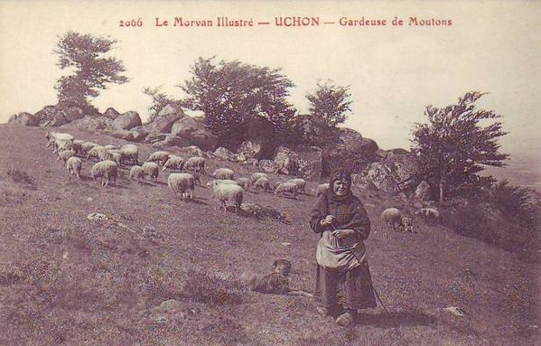 Moutons 05