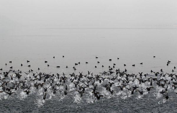 sem103-Z7-Migration-Foulques-Cachemire.jpg