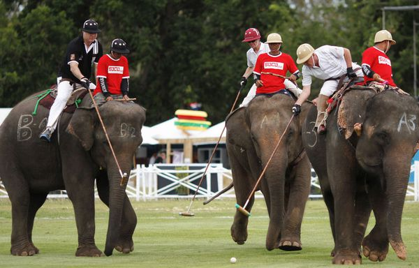 sem11sea-Z32-Polo-sur-elephant-Thailande-copie-1.jpg