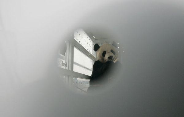sem11deca-Z23-Panda-Chengdu-Shuangliu.jpg