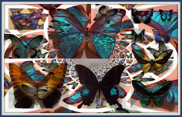 montage papillons 4 BIS