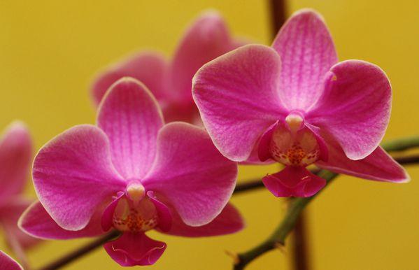 Orchidee002.jpg