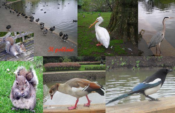 2012-05 LONDRA animali