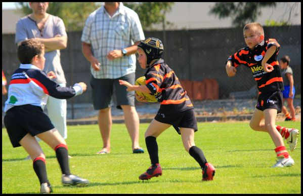 ecole-rugby-vallespir--3--copie-1.JPG