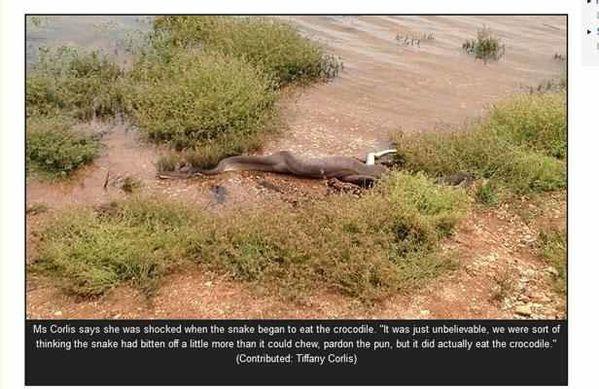serpent-avale-un-crocodile.jpg
