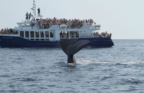 whale-watching-08-07-2012 9481 -3m